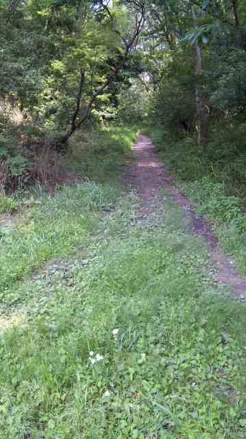 今日は平和公園で75分走